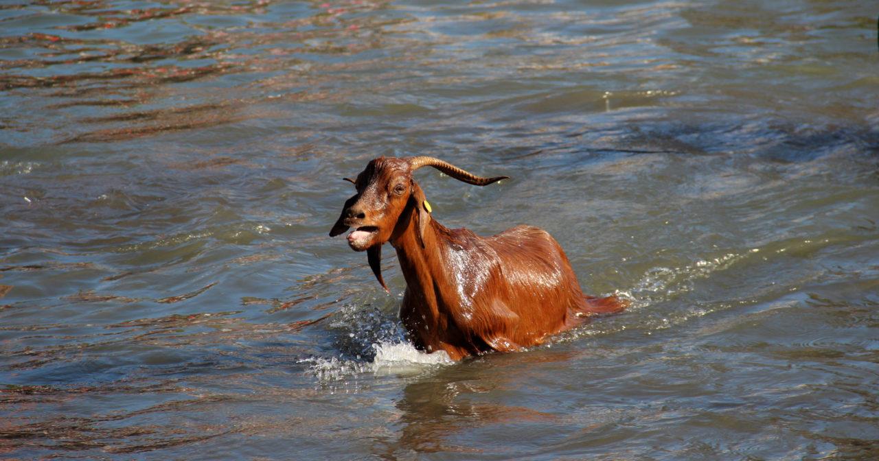 Baño de las Cabras - Puerto de la Cruz
