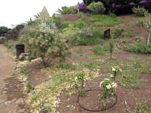 Jardines de los Hornos de Cal Foto de VxP
