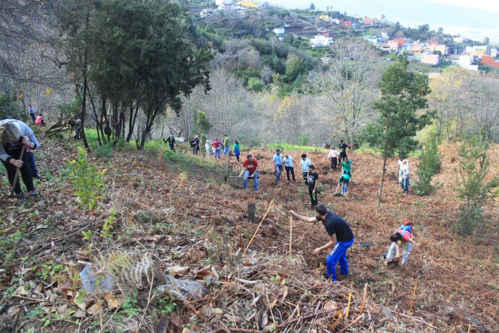 El Cabildo y la asociación Arautapala recuperan los montes de La Orotava con una actividad de repoblación