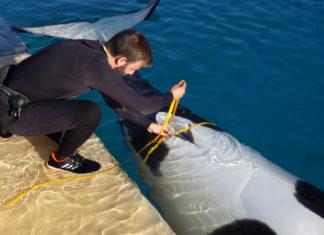 Orca Morgan en el Loro Parque