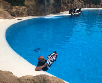 Activista desde el agua de la piscina de los delfines en el Loro Parque