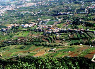 Medianías de Los Realejos - Limpieza Rural