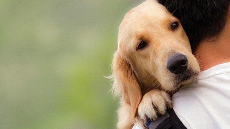 Asamblea Ciudadana pide al Ayuntamiento una campaña sobre la adopción responsable de mascotas