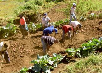 Labores agricolas