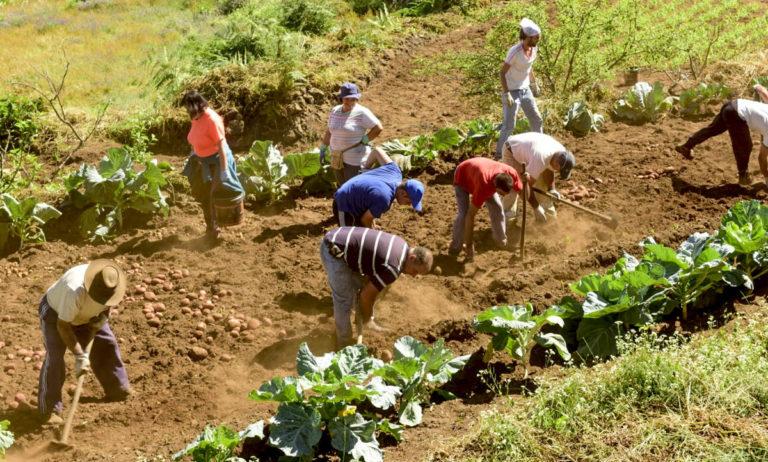 Se investiga la situación actual del sector primario en La Orotava