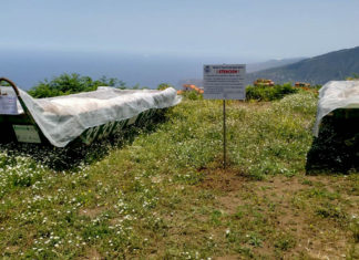 Contenedores para papas con polillas en La Orotava