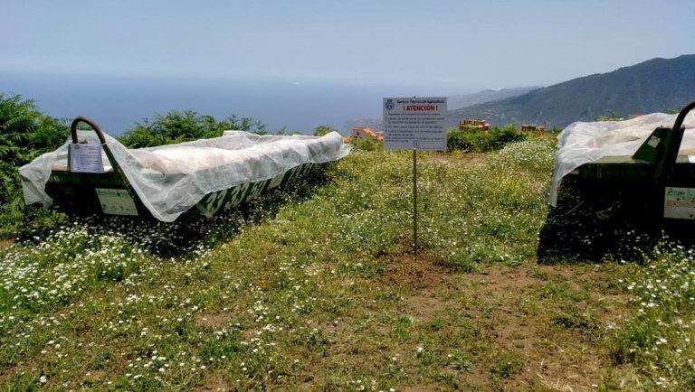 La Orotava también cuenta con contenedores para papas bichadas