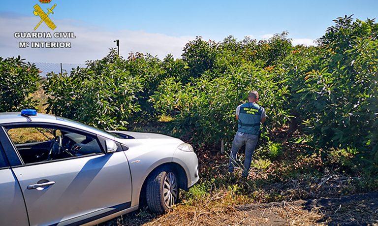 7 personas investigadas por 11 delitos de robo de herramientas y 1.000 kg. de aguacates