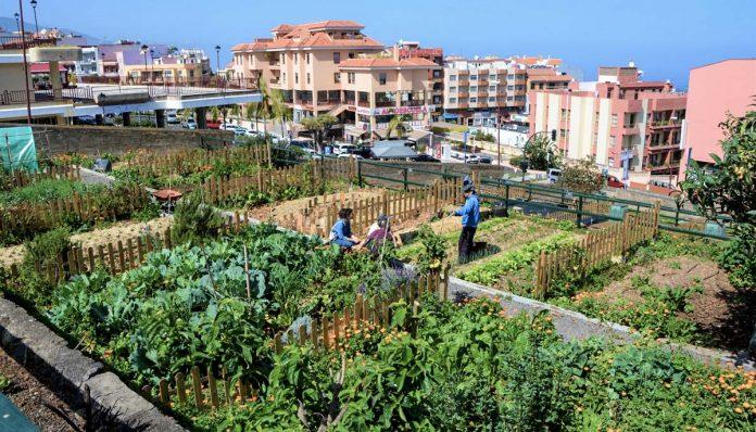 Huerto Urbano en La Orotava