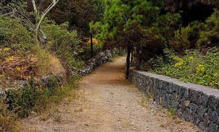 Camino en el municipio de La Guancha