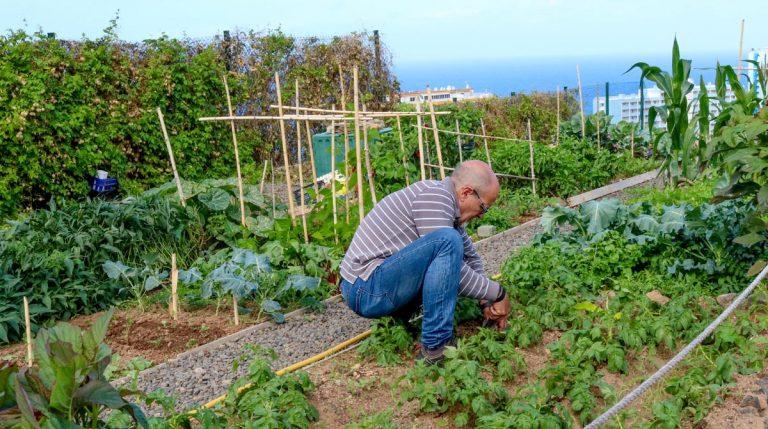 Otras 6 personas cultivarán huertos urbanos municipales en Los Realejos