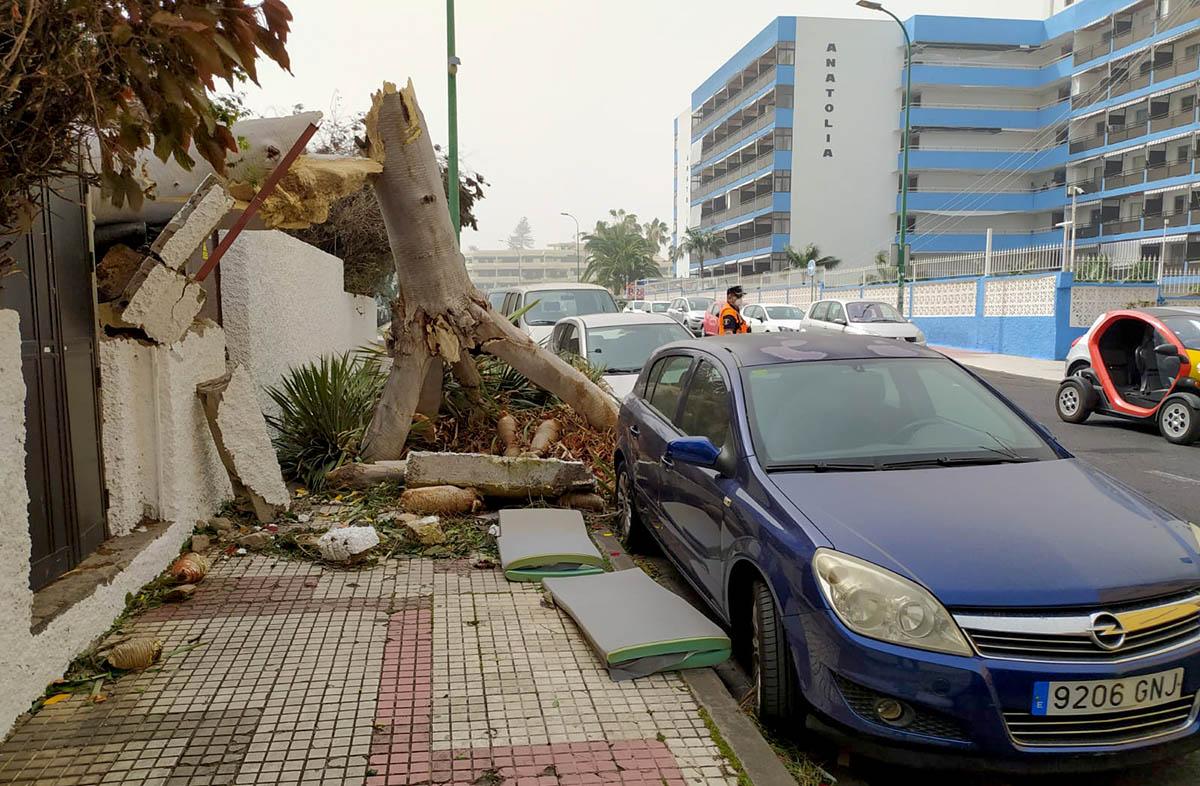 Caida de arbol Puerto de la Cruz